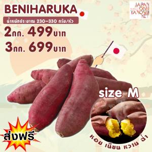 มันหวานญี่ปุ่นพันธุ์เบนิฮารุกะ Size M