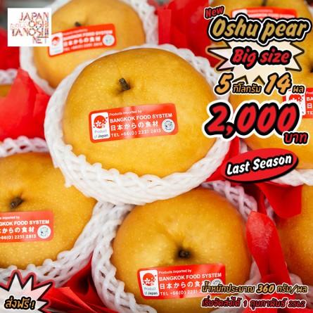 Oshu Japanese Pear