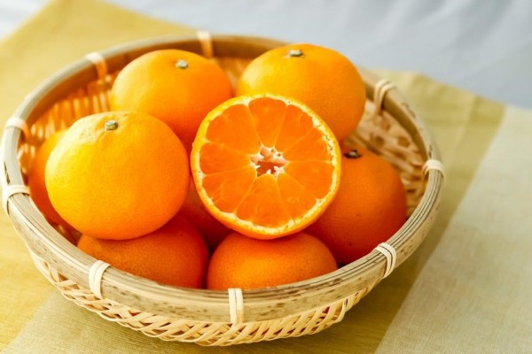ส้มญี่ปุ่นซัตสึมะ