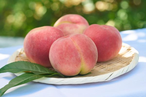 Hikawahakuho  Peach
