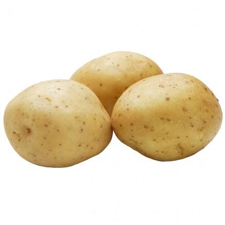 Potato - Nishiyutaka